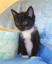 Милый котенок-девочка ищет дом