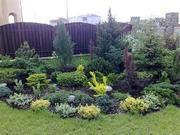 Хвойные и декоративно-лиственные  кустарники.
