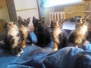 Обаятельные котята ищут друзей